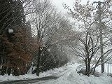 除雪した道路も…